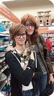 Domestic Shorthair Kitten for adoption in Warren, Michigan - Matzo