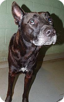 Akita Mix Dog for adoption in Brooksville, Florida - Buddy