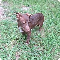 Adopt A Pet :: Coco - West Warwick, RI