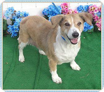 Beagle/Hound (Unknown Type) Mix Dog for adoption in Marietta, Georgia - HERO