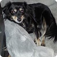 Adopt A Pet :: Freckles - Dothan, AL