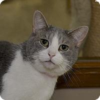 Adopt A Pet :: Laura - Medina, OH