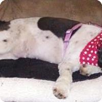 Adopt A Pet :: Baby doll - Lakeland, FL
