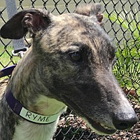 Adopt A Pet :: RS Perfic Crime - Longwood, FL