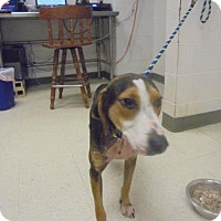 Adopt A Pet :: Baloo* - Lonely Heart - Gulfport, MS