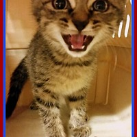 Adopt A Pet :: Atlas - Berkeley Springs, WV