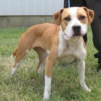 Adopt A Pet :: Sassy (-)** - Owensboro, KY