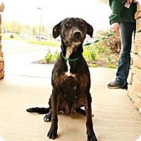 Adopt A Pet :: Mia - Lancaster, OH