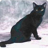 Adopt A Pet :: Suki - Keizer, OR