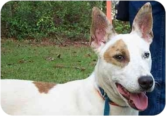 Bull Terrier Mix Dog for adoption in Peachtree City, Georgia - Tess