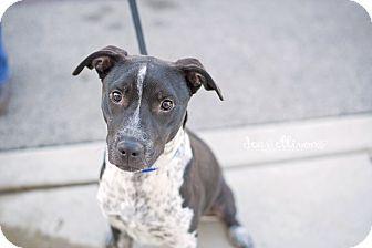 Blue Heeler Mix Dog for adoption in San Antonio, Texas - Paisley
