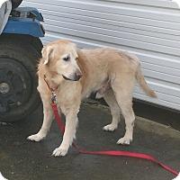 Adopt A Pet :: Charlie - Yorktown, VA