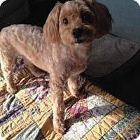 Adopt A Pet :: Harley - Mississauga, ON