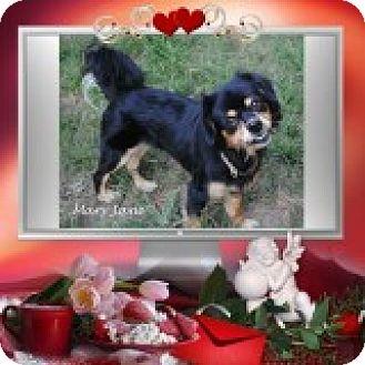 Cocker Spaniel Mix Dog for adoption in Crowley, Louisiana - Mary Jane