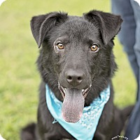 Adopt A Pet :: Chester - Kingwood, TX