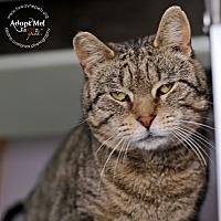 Adopt A Pet :: Harvey - Lyons, NY