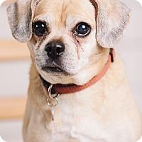 Adopt A Pet :: Kayla - Portland, OR