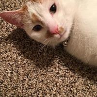 Adopt A Pet :: Pluto - Braidwood, IL