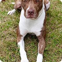 Adopt A Pet :: Ginger - Blacklick, OH