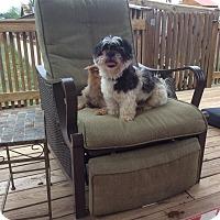 Adopt A Pet :: Milo - San Antonio, TX