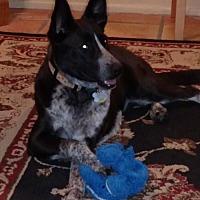 Adopt A Pet :: STELLA - Chandler, AZ