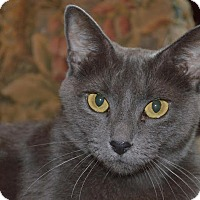 Adopt A Pet :: Sterling - Flower Mound, TX