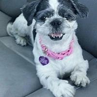 Adopt A Pet :: Summer AKA Maggie - Las Vegas, NV