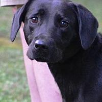 Adopt A Pet :: Jill - White Plains, NY