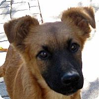 Adopt A Pet :: Baby Maya - Oakley, CA