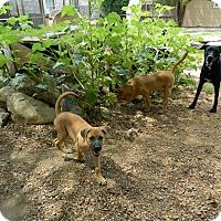 Adopt A Pet :: Regina - Bulverde, TX
