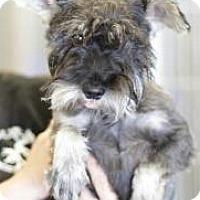 Adopt A Pet :: Hashbrown - Phoenix, AZ