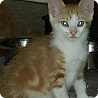 Adopt A Pet :: Henry - Sunderland, ON