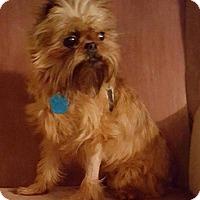 Adopt A Pet :: Roz-Pending Adoption - Omaha, NE