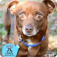 Adopt A Pet :: Cliff - Bradenton, FL