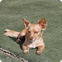 Adopt A Pet :: Jessie - Rockwall, TX