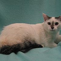Adopt A Pet :: Harrison - Redwood Falls, MN