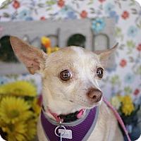 Adopt A Pet :: Tink - Hamilton, ON