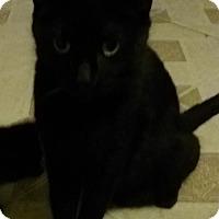 Adopt A Pet :: Tipitina - Glendale, AZ
