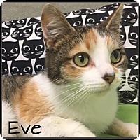 Adopt A Pet :: Eve-SPONSORED ADOPTION FEE - Jasper, IN