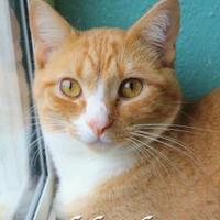 Adopt A Pet :: Wild Thing - Bradenton, FL