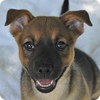 Adopt A Pet :: Stella - Atlanta, GA