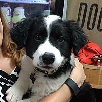Adopt A Pet :: Teddy - Eden Prairie, MN