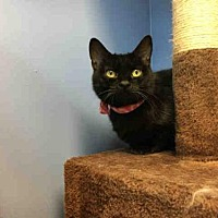 Adopt A Pet :: LITTLE - Canfield, OH