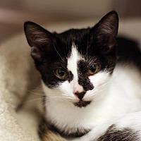 Adopt A Pet :: Simmons - San Diego, CA