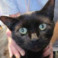 Adopt A Pet :: Charcoal - Memphis, TN