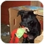 Photo 4 - Labrador Retriever Mix Puppy for adoption in all of, Connecticut - Berry
