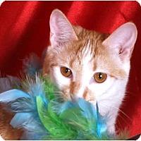 Adopt A Pet :: Bunny - Nashville, TN