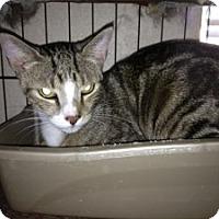 Adopt A Pet :: Louie - Fort Lauderdale, FL
