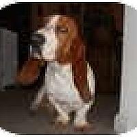Adopt A Pet :: Shorty - Conyers, GA
