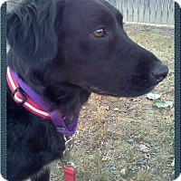 Adopt A Pet :: Raven ~ Adoption Pending - Youngstown, OH